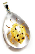 Ed Speldy East SD1101 Real Bug Necklace-Black & White Leaf Beetle
