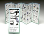 Steven M. Lewers & Associates LEWERSBSA137 Birds Southeast Atlantic Coast Book