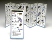 Steven M. Lewers& Associates LEWERSBNE154 Folding Guide Birds New England Coast