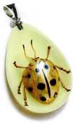 Ed Speldy East YD1101 Real Bug Necklace-Black & White Leaf Beetle
