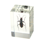 Ed Speldy East PW106 Real Bug Paperweight Regular-small-Green Tiger Beetle