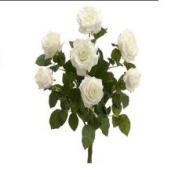 FBR054-PE-CR 21.5 in. Peach-Cream Confetti Rose Bush X7- Pack of 6
