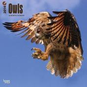 Owls 2014 Wall Calendar