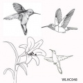 Clear stamp set Hummingbirds