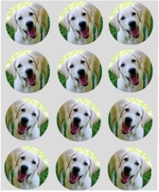 12 Labradore dog rice paper fairy / cup cake 40mm toppers pre cut decoration