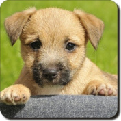 Border Terrier Puppy Leather Coaster Christmas Gift, Ref:AD-BT4SC