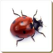 Close-Up Ladybird Leather Coaster Christmas Gift, Ref:ILB-1SC