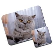 British Shorthair Cat Premium Mousematt & Coaster Set