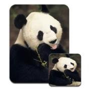 Panda Bear Premium Mousematt & Coaster Set