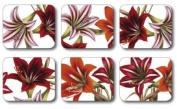 Jason J2283 Amaryllis Coasters, Set of 6