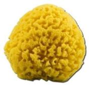 Earthline - Sea Sponge