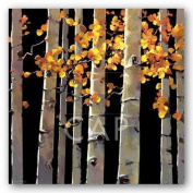 Aspen Grove by Michael O'Toole Art Print Poster