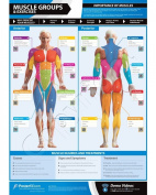Muscle Groups & Exercises Wall Chart - with on-line video training support