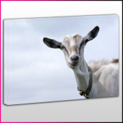 A172 Billy Goat With Pale Sky Background Framed Ready To Hang Canvas Print, Animal, Pop Street Wall Art, Picture