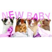Baby Girl Guinea Pig Card