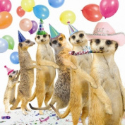 Conga Meerkats Birthday Card