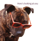 Here's looking at you Birthday boy Staffordshire Bull Terrier Birthday card Staffy Staffie