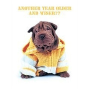 Another Year Older and Wiser.. Shar-pei in yellow cardigan Birthday Card Sharpei Shar pei