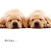 Relax...it's your Birthday Yellow Labrador card