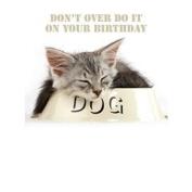 Tabby Kitten Cat asleep in dog bowl Birthday card