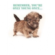 Cute fluffy puppy dog Remember you're only young once... Birthday card