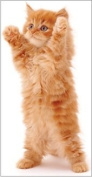 'Big Hug' Ginger Kitten Cat blank slimline greetings card Jane Burton