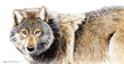 On the Lookout Wolf Blank Greeting Card