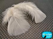 Turkey Feathers, Turkey Plumage - Ivory Turkey T-base Plumage Feathers - 15ml