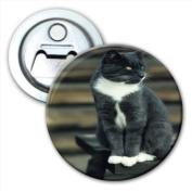Grey & White Short Hair Cat On Park Bench Bottle Opener Fridge Magnet