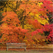 """Open Greeting Card - """" Lonely Bench """" - Amazing Places Designer Range - AP025"""