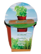Grow a Herbs Oregano in a Pot - A great Present or Stocking Filler