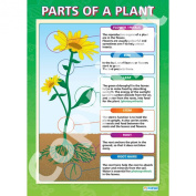 Parts of a Plant Wall Chart/Poster in high gloss paper