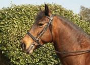 Windsor Equestrian Horses Plain Hunter Bridle