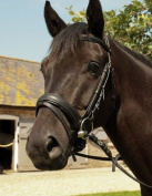 Heritage English Leather Comfort Horses Bridle With Flash Noseband