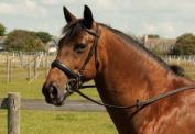 Heritage English Leather Comfort Horses Bridle Cavesson Noseband