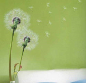 . Flying Dandelion . Grass Wall Stickers Home/Room Decors Mural Art Decals Adhesive Decorative Transparent