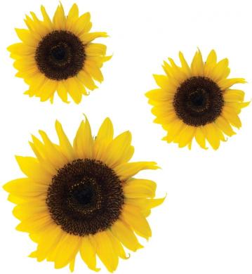 Sunflower flower Stickers,car, van, wall art, laptop Wheelie Bin Fridge Decals