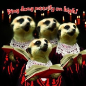 "Meerkats Caroll Singers ""Ding Dong Meerily on High"" Festive Christmas Cards"