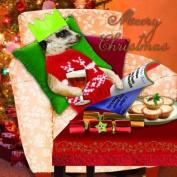 """Meerkat """"Meery Christmas"""" Festive Christmas Card Pack"""