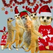 MEERKATS CHRISTMAS CONGA SINGLE CHRISTMAS CARD