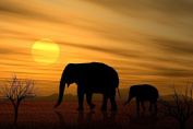 Elephants in The Sunset Large Photo Poster 41cm x 28cm