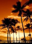 Tropical Horizon Sunset Large A3 Size Photo Beach Hawaii Scene Seaside View, matte canvas effect fine art poster paper