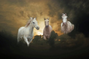 White Horses in Clouds Large A3 Canvas Photo Poster Horse Montage