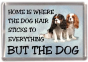 "Cavalier King Charles Spaniel (Tri & Blenheim) Fridge Magnet ""HOME IS WHERE THE DOG HAIR STICKS TO EVERYTHING BUT THE DOG"""