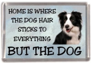 "Border Collie Dog Fridge Magnet ""HOME IS WHERE THE DOG HAIR STICKS TO EVERYTHING BUT THE DOG"""