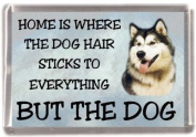 "Alaskan Malamute Fridge Magnet ""HOME IS WHERE THE DOG HAIR STICKS TO EVERYTHING BUT THE DOG"""