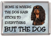 "Cavalier King Charles Spaniel (Black & Tan) Fridge Magnet ""HOME IS WHERE THE DOG HAIR STICKS TO EVERYTHING BUT THE DOG"""
