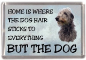 "Deerhound Fridge Magnet ""HOME IS WHERE THE DOG HAIR STICKS TO EVERYTHING BUT THE DOG"""