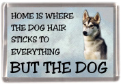 "Siberian Husky Fridge Magnet ""HOME IS WHERE THE DOG HAIR STICKS TO EVERYTHING BUT THE DOG"""