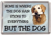 "Golden Retriever No 1 Fridge Magnet ""HOME IS WHERE THE DOG HAIR STICKS TO EVERYTHING BUT THE DOG"""